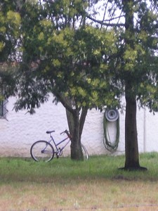 bike__tree_ggn