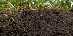 soil_health