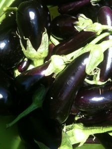 2010_Eggplant_from_my_garden-225x300